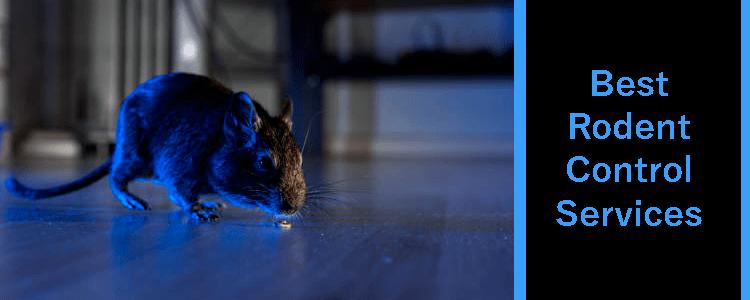 Best Rodent Extermination