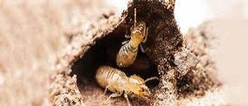 Termite Control Landsdale